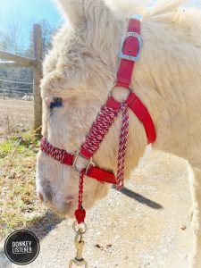 best donkey halter for training