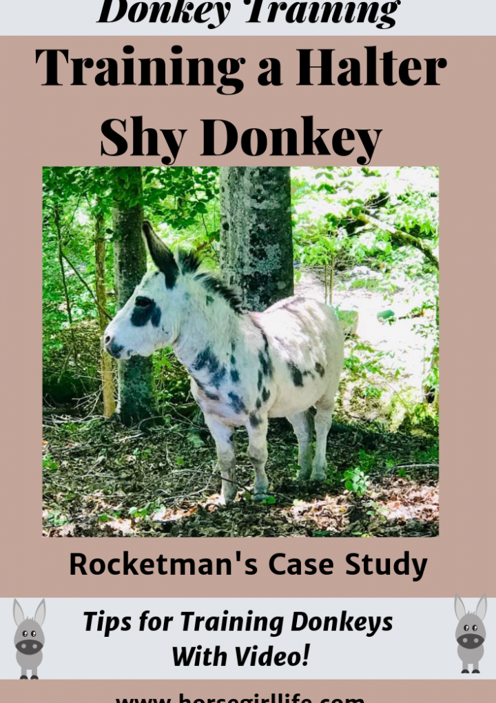Training Donkeys (Gentling and Starting Positive Reinforcement)