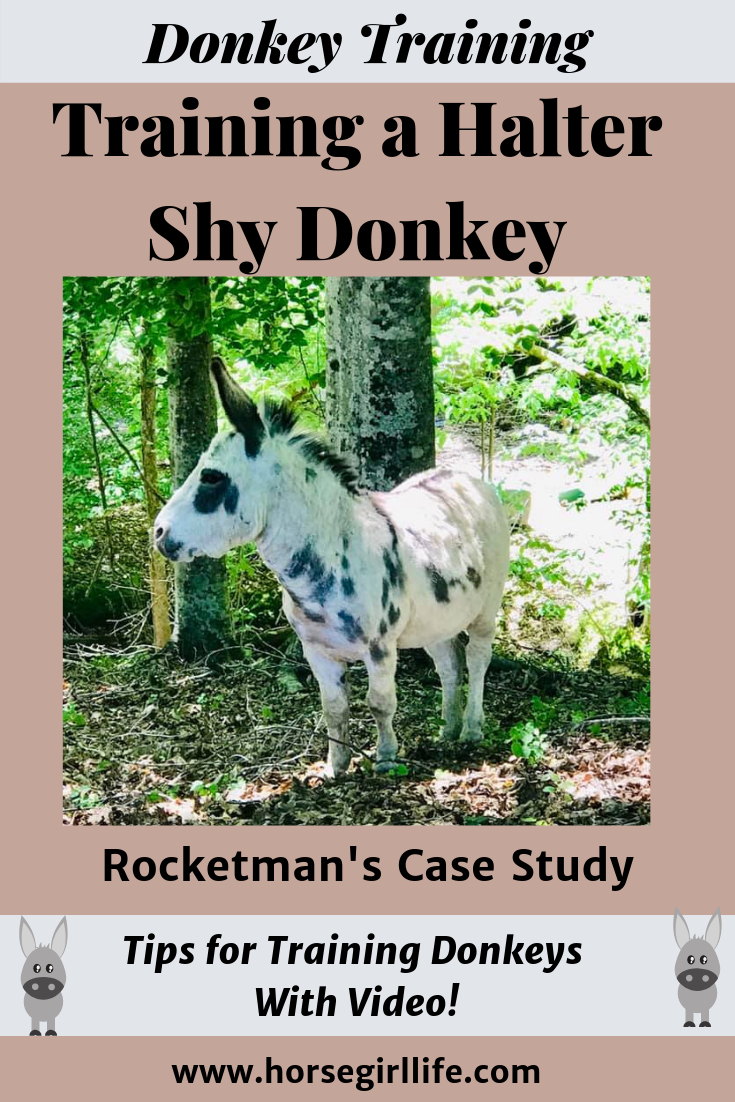 donkey training