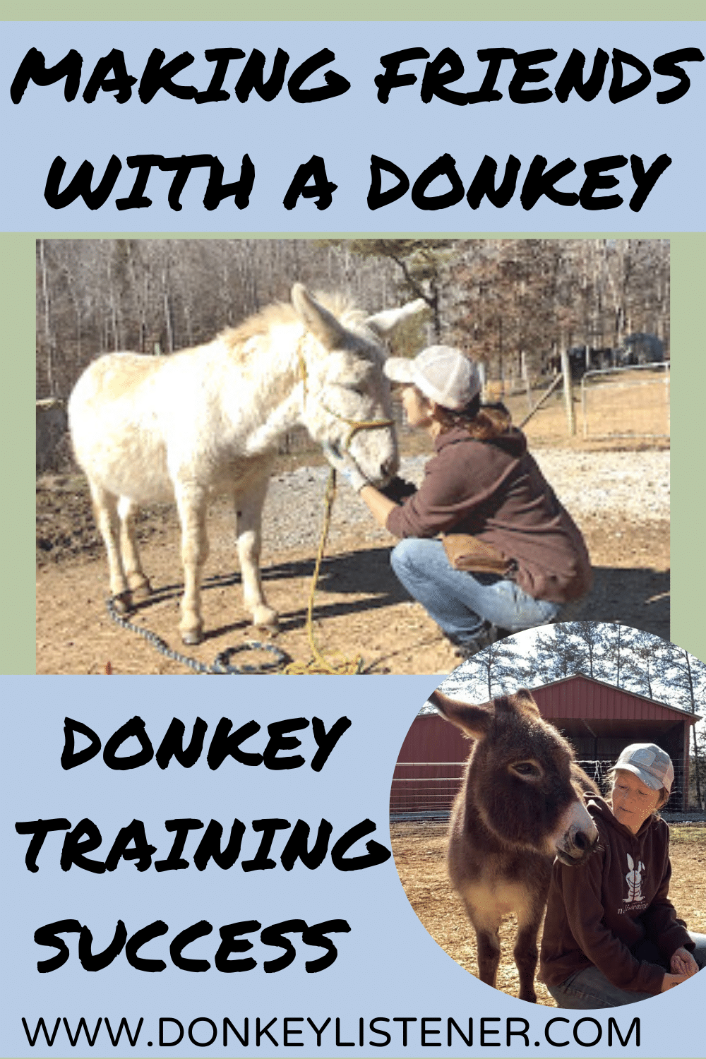 how to make friends with a donkey