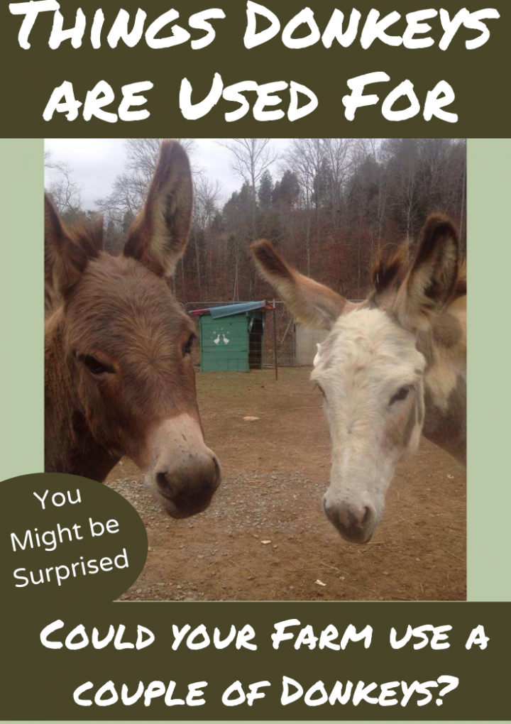 What Are Donkeys Used For?
