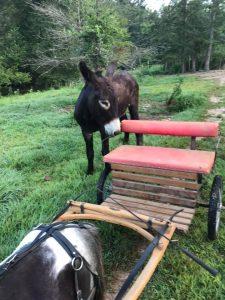 Donkey driving training