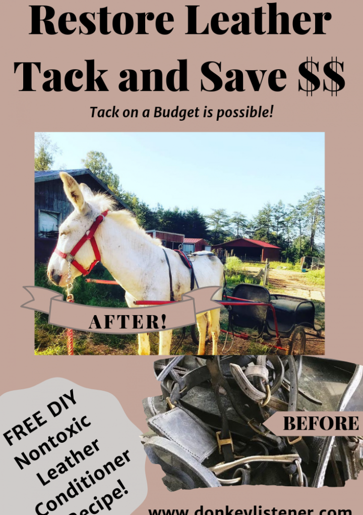 Tack Care {Conditioning and Restoring Leather}