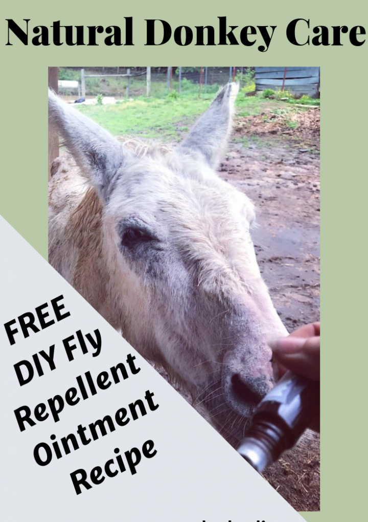 Fly Repellent Ointment for Equine [Free Recipe]