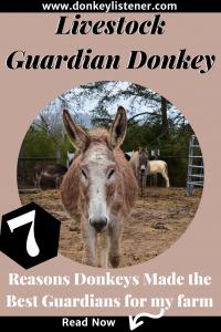 Guardian donkeys