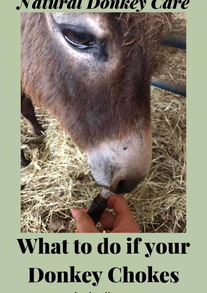 Donkey Care {what to do if your donkey chokes}