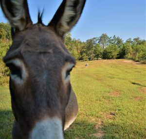 natural donkey care