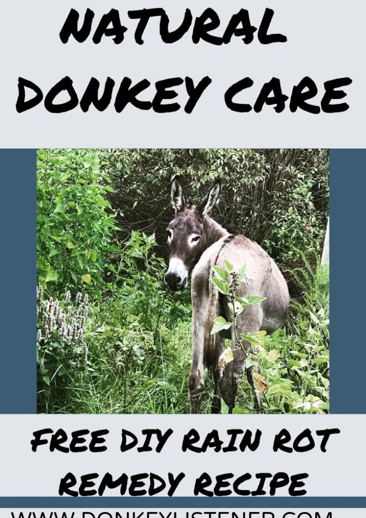 Rain Rot in Donkeys {FREE Home Remedy}