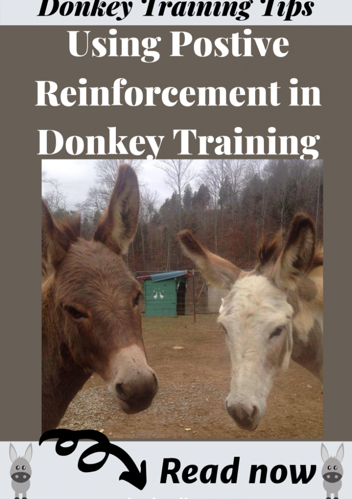 Donkey Training Tips and Information