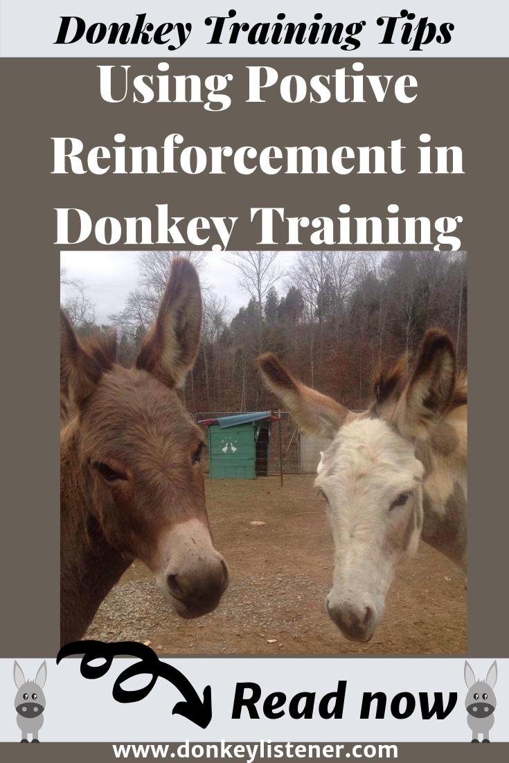 donkey training tips