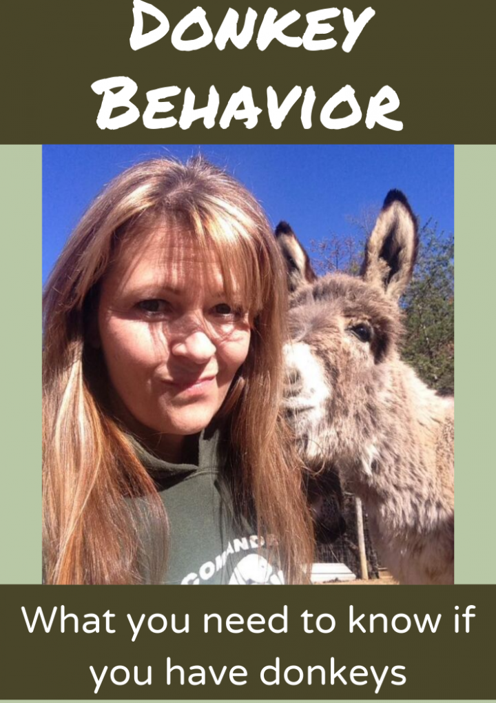 How do Donkeys show affection?