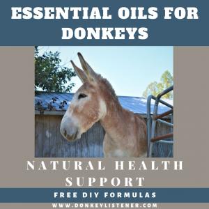 essential oils for equine