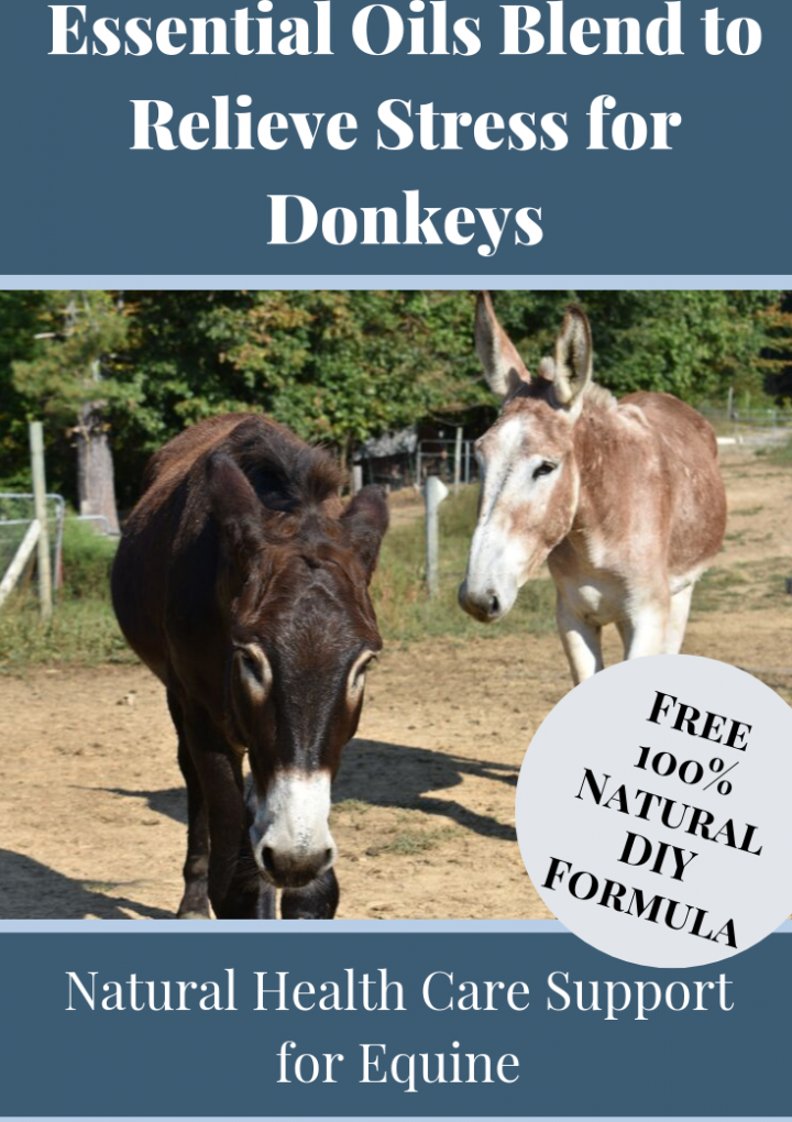 Donkey Health Problems {Dealing With Stress}
