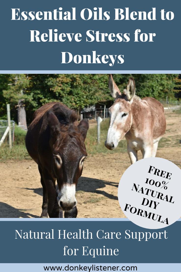 essential oils for donkeys