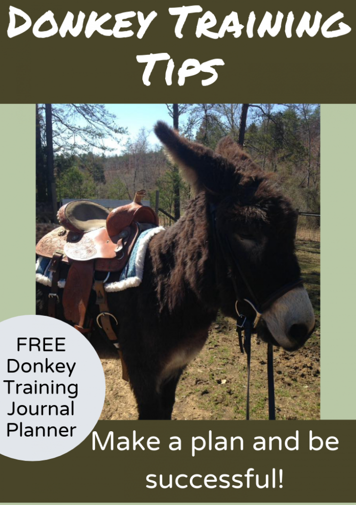 Donkey Training Tips {FREE Training Planner}
