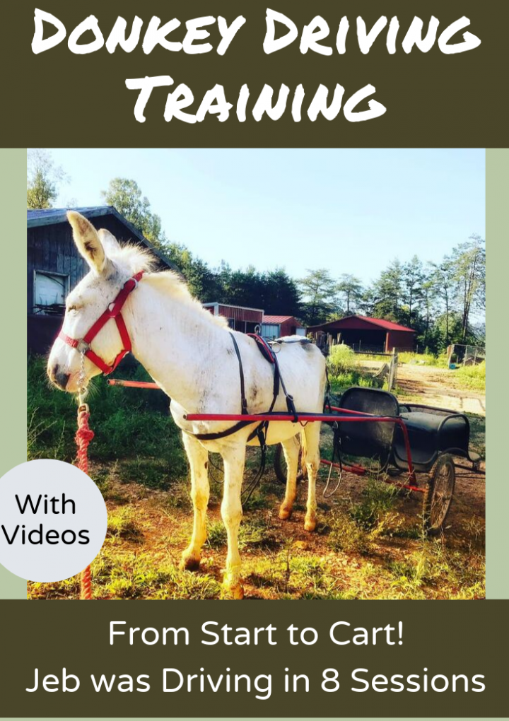 How to Train a Driving Donkey {With Videos}