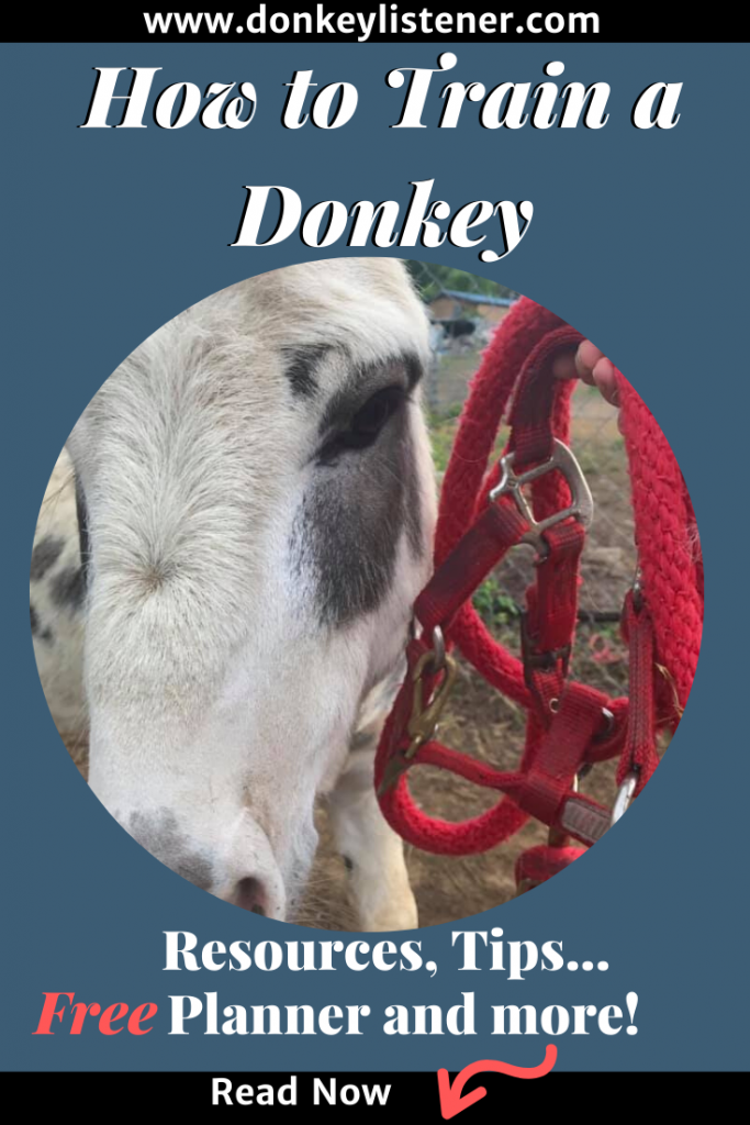 HOw to train a donkey