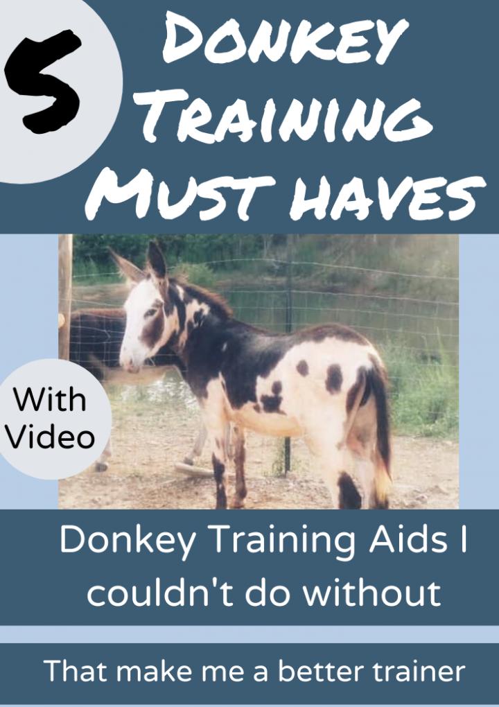 Donkey Training Information {My Top 5 Training Aids}