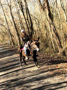 Riding donkeys, aka, Saddle donkeys