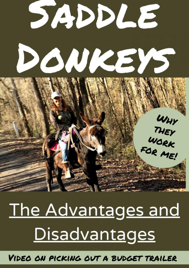 Saddle Donkeys