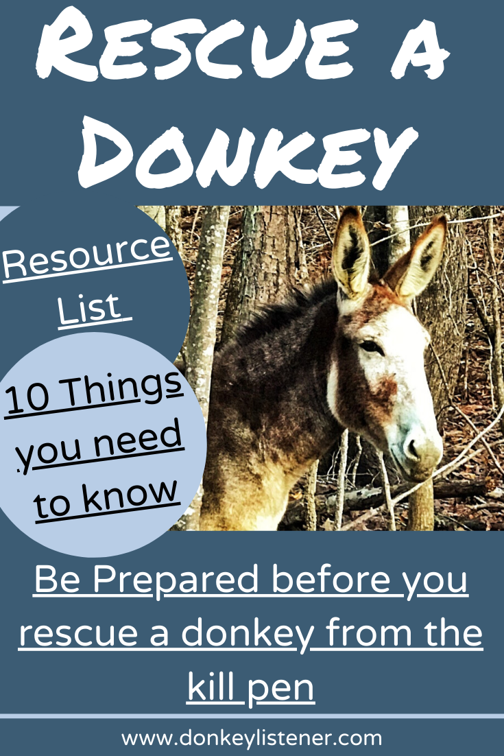 rescue a donkey