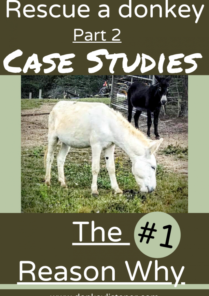 Rescue Donkey {Part 2, Case Study} Why I do this