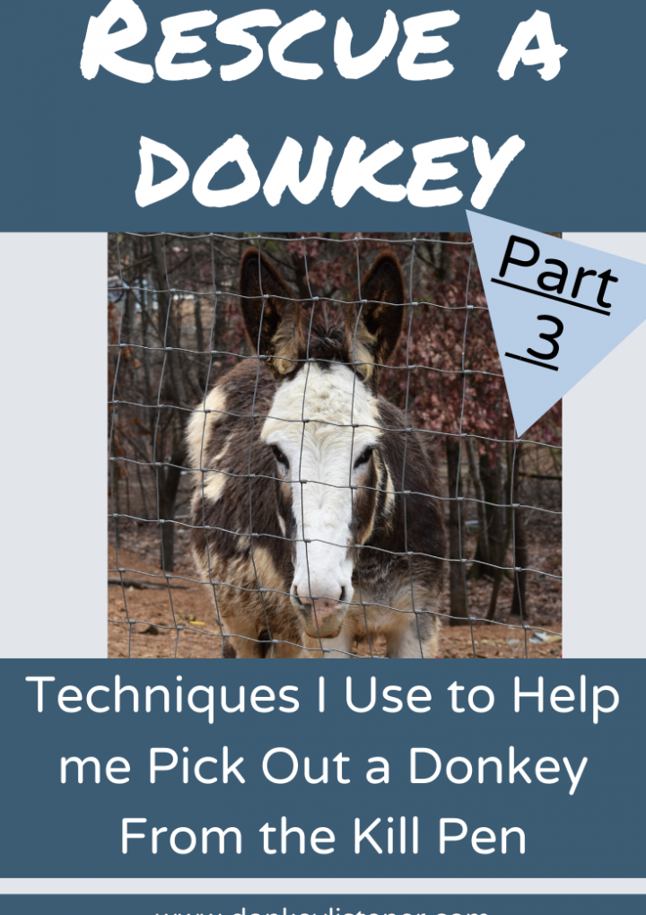 Rescue Donkeys {Part 3} Techniques to rescue a donkey from the kill pen you can handle.