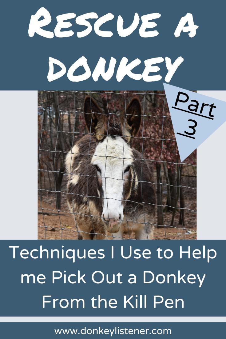 rescue donkeys