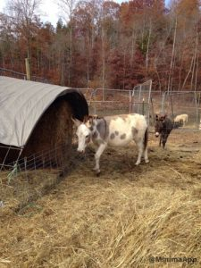 DIY hay feeder for round bales and bagged hay