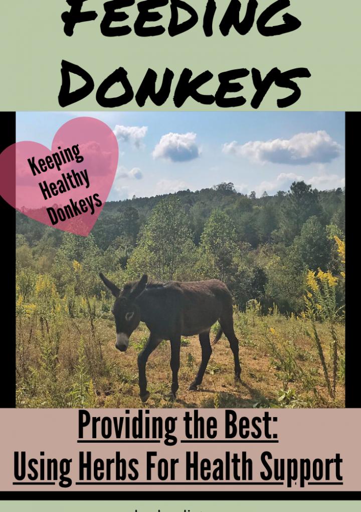 What do donkeys eat? {Herbs for Donkeys!}