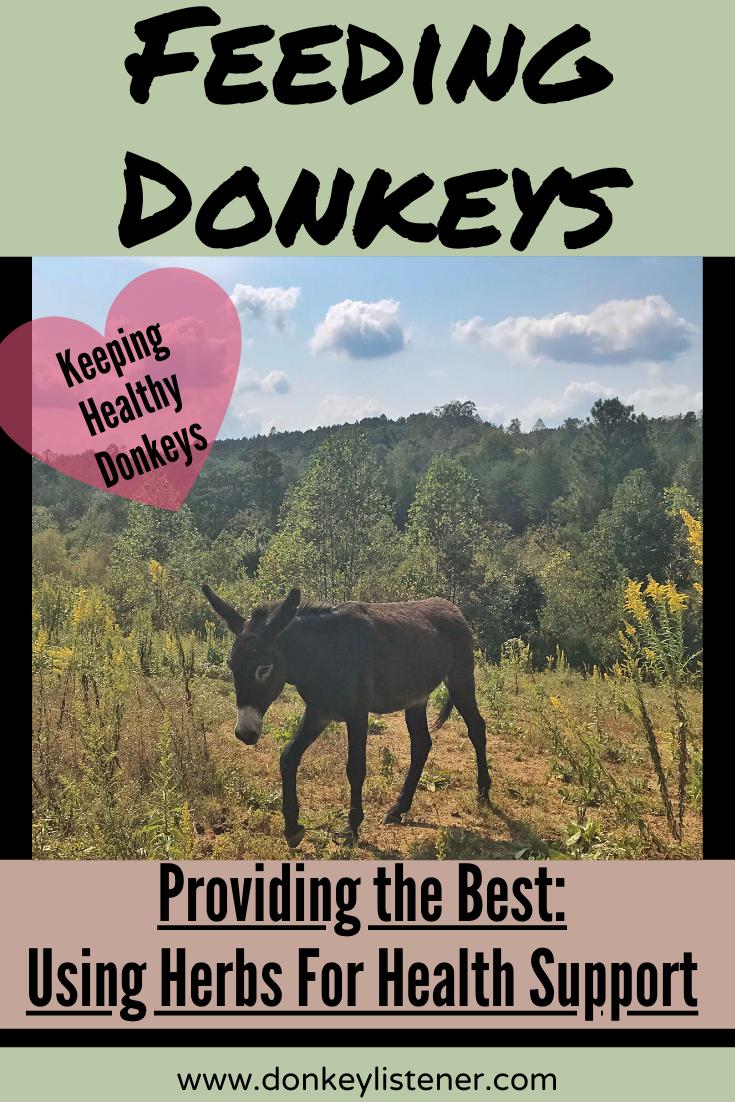 Feeding Donkeys