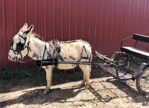 driving donkeys