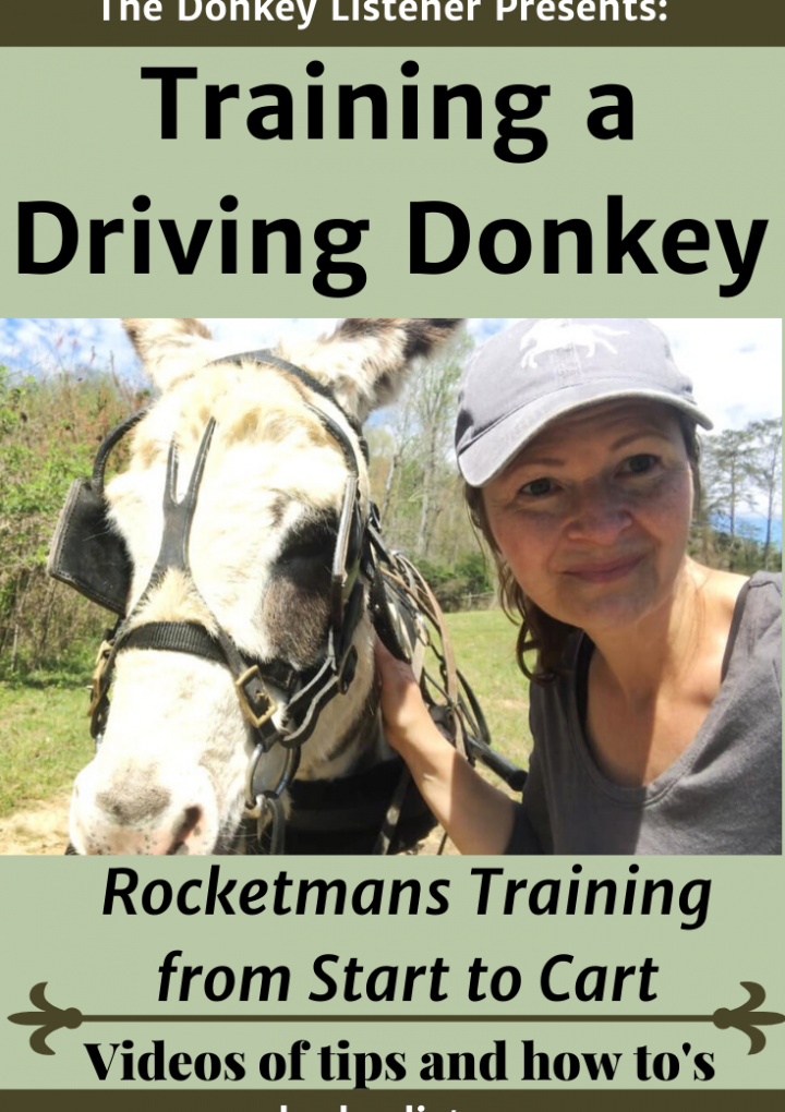 Driving a Donkey {Video Series from Start to Cart}