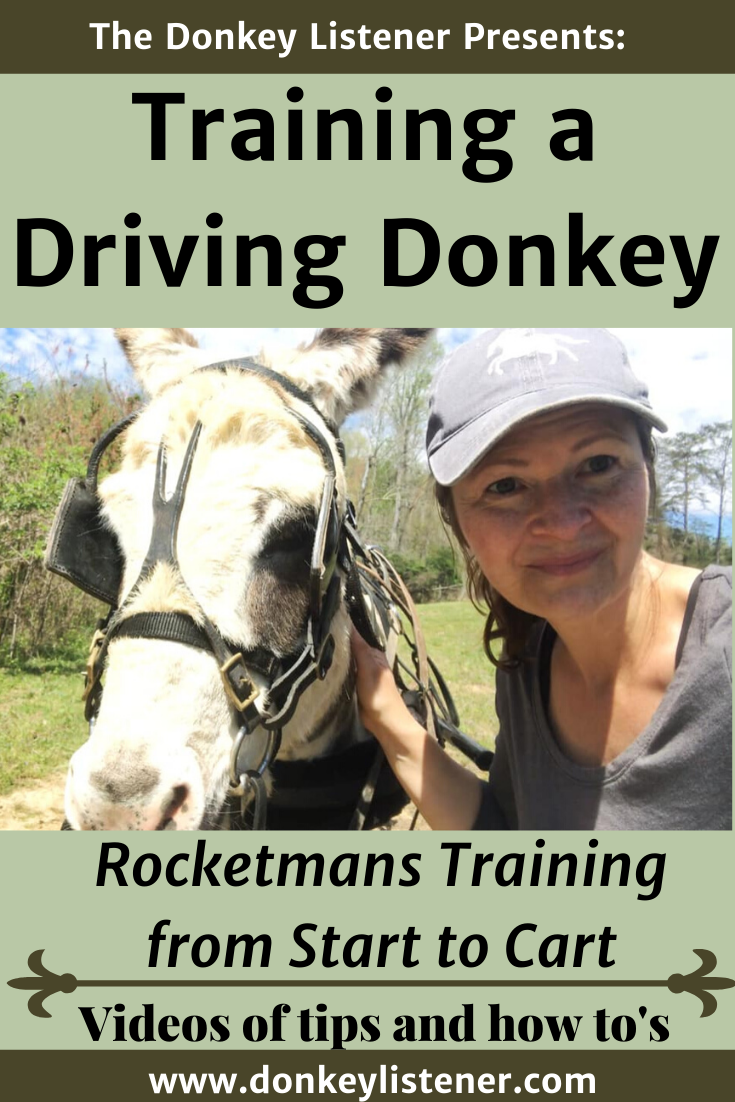 Training a donkey to pull a cart