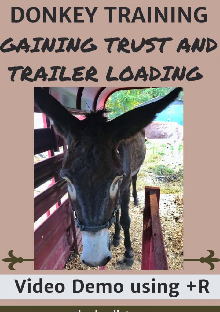 Level 1 Donkey Training: Gaining a Donkeys Trust
