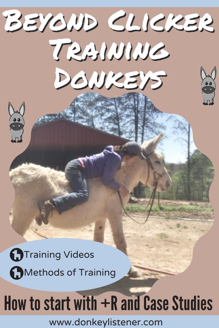 Clicker training donkeys