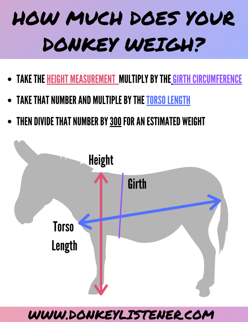 can you ride a donkey? donkey weight