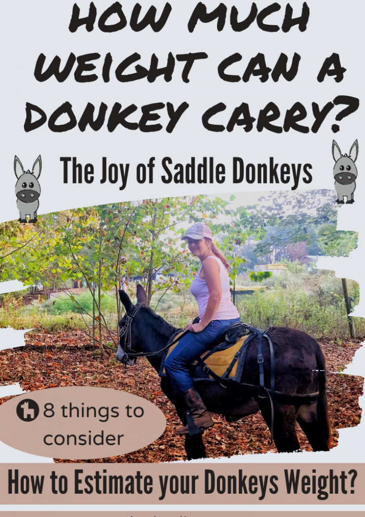 Can You Ride a Donkey? {How much weight can a donkey carry?}