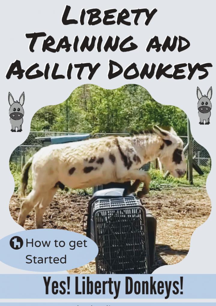 Training Donkeys: Liberty Donkey & Donkey Agility
