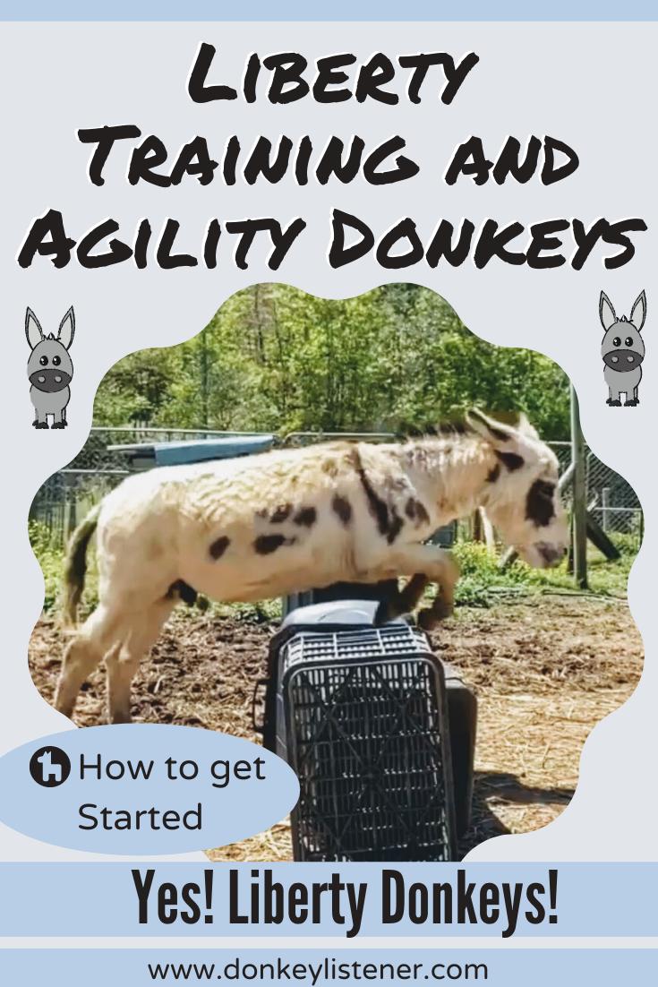 Liberty donkey and donkey agility