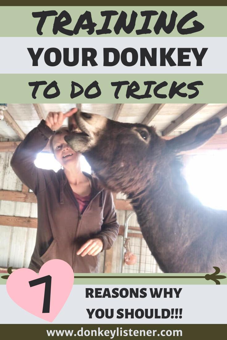 donkey tricks