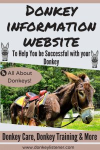 All about keeping donkeys
