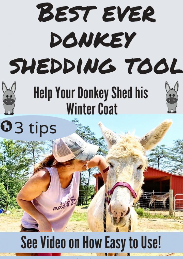 Shedding Tool (When do Donkeys Shed Winter Coat)