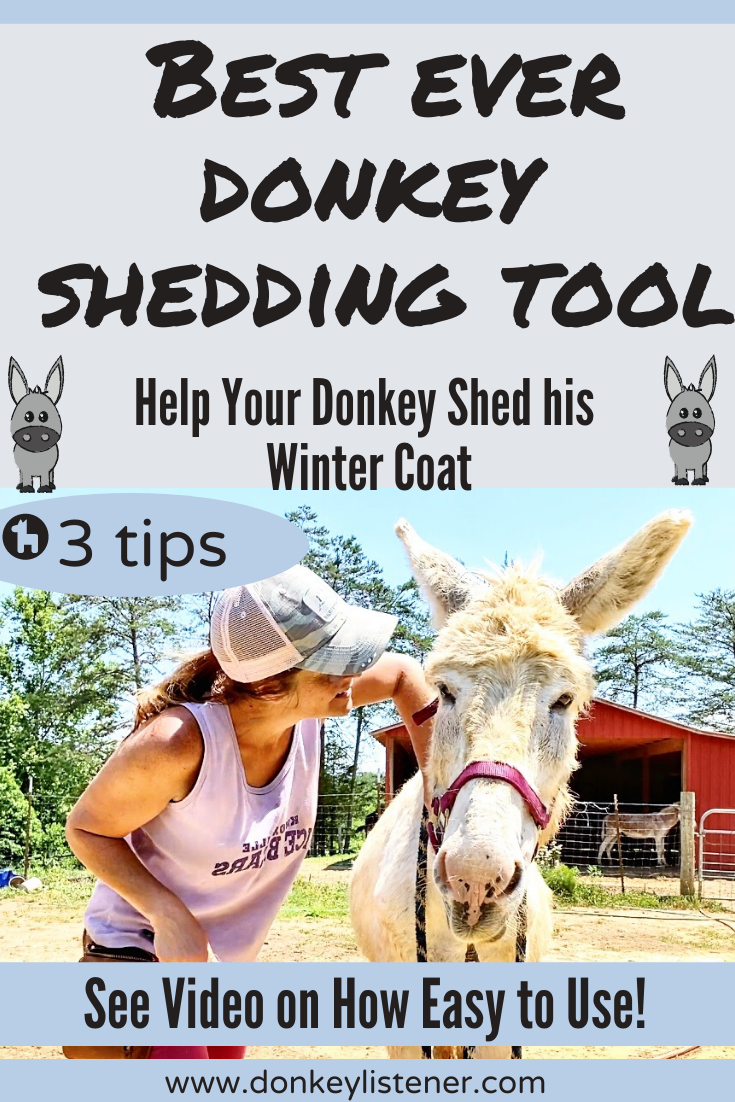 shedding tool when do donkey shed winter coat