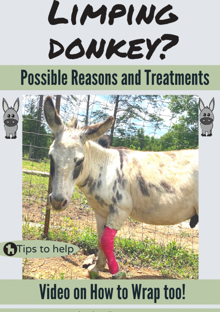Why is my Donkey Limping?