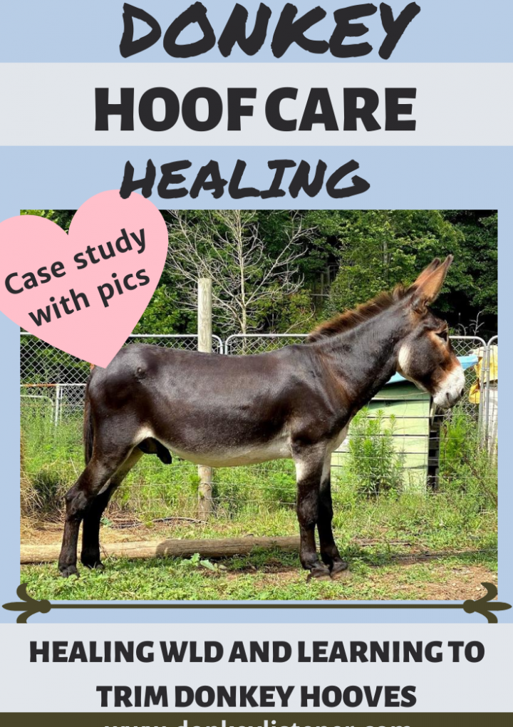 Donkey Hooves: Case Study Dylan