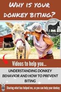 Biting donkey