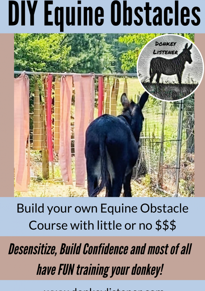 Equine Obstacle Course