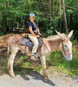 average donkey weight