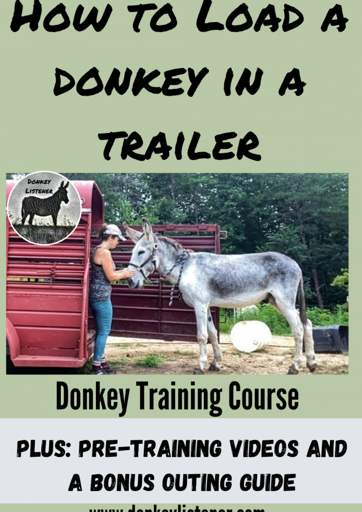 How to Transport a Donkey {Ultimate Guide to Trailer Loading a Donkey}
